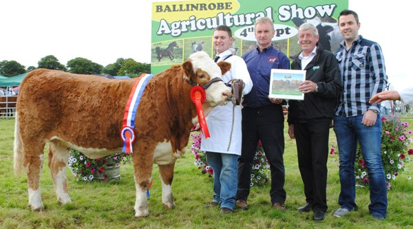 Ballinrobe & Western Club Yearling Heifer Champion 'Tonrevagh Gretta'