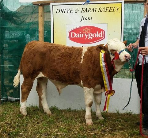 Bantry & Southern Simmental Calf Final Junior Bull Calf Champion 'Lismoy Hamlet'