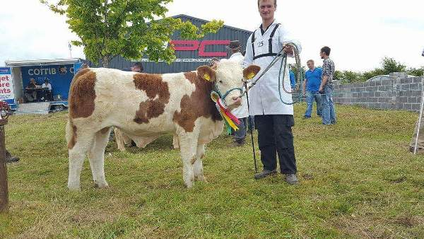 Claremorris Show Reserve Champion 'Tonrevagh High Flyer'