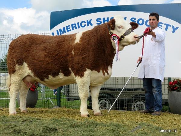 Limerick Show Reserve Champion 'Kilbride Farm Eunice'
