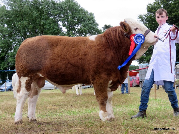 Sth East Clare Show'16 Res Champ Mount Gilbert
