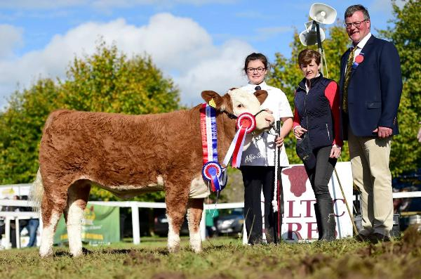 Strokestown Show & Celtic Sires Junior Heifer Calf Champion 'Shiloh Heather'