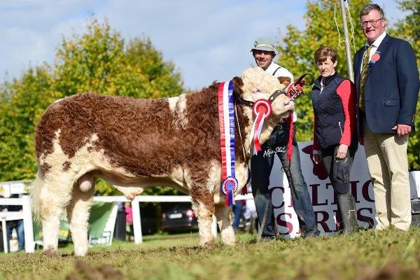 Strokestown Show & Celtic Sires Senior Bull Calf Champion 'Clonagh Horny Tiger'