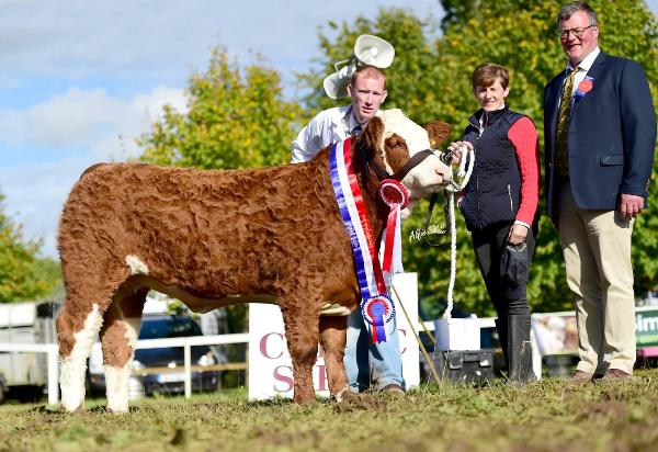 Strokestown Show & Celtic Sires Senior Heifer Calf Champion 'Clonguish Gemma'
