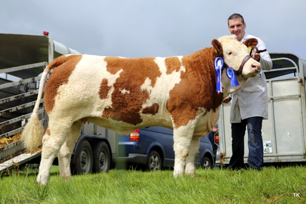 Swinford Show Reserve Champion 'Lakeview Grammy'