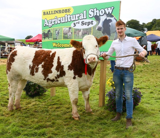 Ballinrobe 2017 Western Club Senior Heifer Class Winner 'Fairymount Genius'