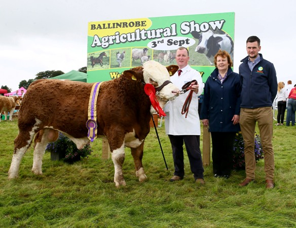 Ballinrobe 2017 Western Club Champion Connacht Yearling Bull Calf sponsored by Aurivo. Photo: © Michael Donnelly