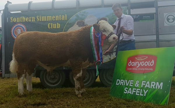 Bantry 2017 Reserve Champion & Southern Senior Bull Calf Champion 'Seaview Handsome Prince'