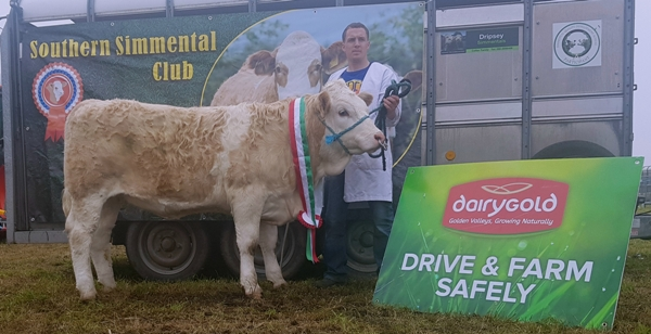 Bantry 2017 Southern Club Senior Heifer Calf Champion 'Dermody Heater 2'