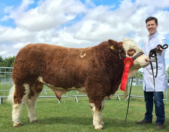 Fingal 2017 Reserve Champion Dermotstown Highking