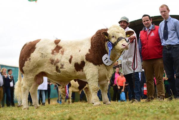 Agri Care Nutrition 2017 Reserve Champion 'Clonagh Hardman'
