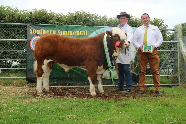Barryroe 2017 Southern Simmental Club Weanling Bull Calf Champion 'Raceview Hulk'