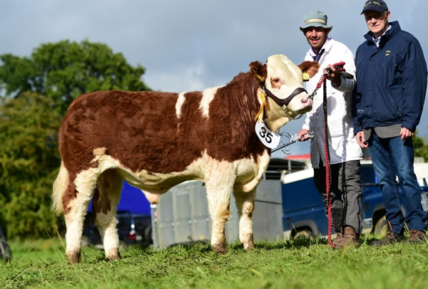 Strokestown 2017 Junior Bull Third 'Clonagh Just A Dream'