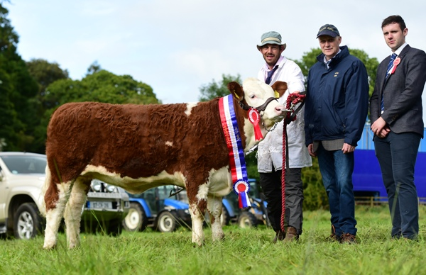 Strokestown 2017 Junior Heifer Champion 'Clonagh Jessie Girl'