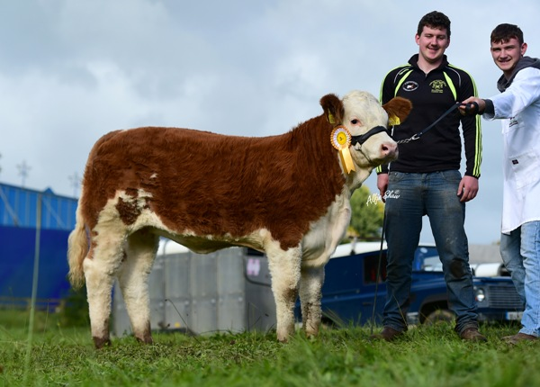 Strokestown 2017 Junior Heifer Third 'Fohera Jodie'