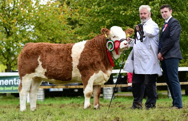 Strokestown 2017 Reserve Champion 'Kickhams Haven'