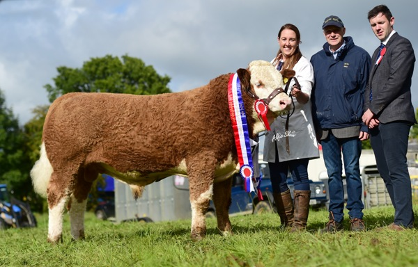 Strokestown 2017 Senior Bull Champion 'Seaview Handsome Prince'