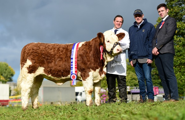 Strokestown 2017 Senior Heifer Champion 'Tisaran Her Majesty'