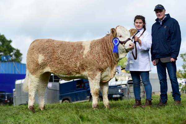 Strokestown 2017 Reserve Senior Heifer 'Tawley Hanna'