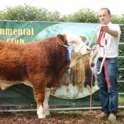 Barryroe 2017 2nd Southern Simmental Club Weanling Bull Calf Champion 'Bearna Dhearg Haka'