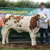 Barryroe 2017 2nd Southern Simmental Club Weanling Heifer Calf Champion 'Raceview Her Royal Diamond'