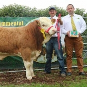 Barryroe 2017 3rd Southern Simmental Club Weanling Bull Calf Champion 'Carbery Hamilton'