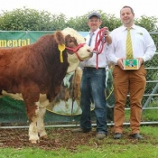 Barryroe 2017 3rd Southern Simmental Club Yearling Bull Calf Champion 'Carbery Hero'