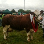 Ballina 2011 Champion 'Fearna Tiffany'