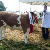 Castleblayney 2011 Champion 'Broomfield Alice'