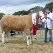 Cork 2011 Champion 'Raceview Wyntie Matilda'