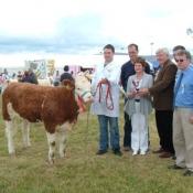 Dundalk 2011 Champion 'Broomfield Belle'