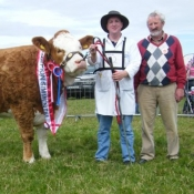 Enniscrone 2011 Overall Simmental Champion & Interbreed Champion 'Rathlee Andrea'