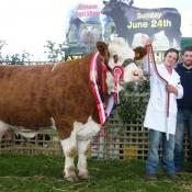 Athlone 2012 Champion 'Fearna Tiffany'