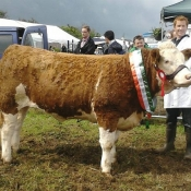Baileborough 2012 Champion 'Broomfield Belle'