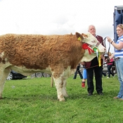 Ennis 2012 Overall Champ 'Raceview Beauty Matilda'