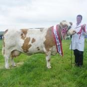 Midleton 2012 Overall Champion 'Ballyedmond Rosie'