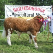 Baileborough 2013 Overall Champion 'Dermotstown Del Boy ET'