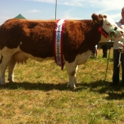 Ballina 2013 Champion & Interbreed Champion \'Seepa Aster\'