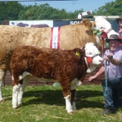 Barryroe 2013 Overall Champion Interbreed Female 'Raceview Winty Matilda'