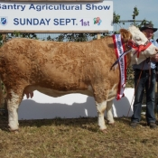 Bantry 2013 Champion 'Raceview Winty Matilda'