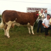 Crossmolina 2013 Interbreed Champion \'Seepa Aster\'