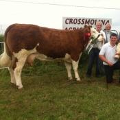 Crossmolina 2013 Interbreed Champion 'Seepa Aster'