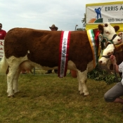 Erris 2013 Overall Simmental & Interbreed Champion \'Seepa Aster\'