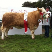 Limerick 2013 Show Champion 'Raceview Winty Matilda'