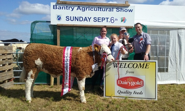 Bantry Overall Champion & Southern Simmental Club Senior Heifer Champion 'Seaview Gabby'