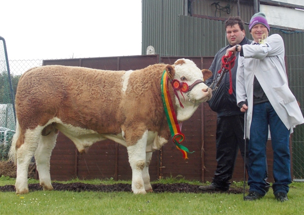 Barryroe Yearling Bull Champion 'Slieveroe Frontline ET'