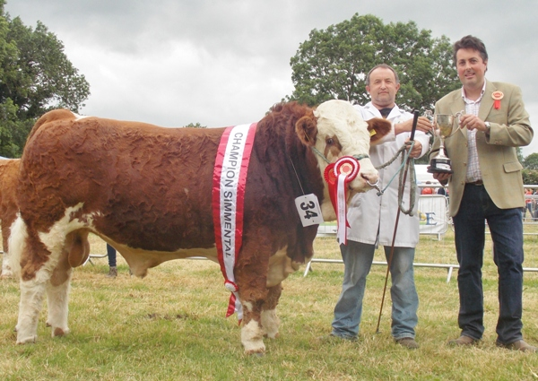Charleville Show Male Champion 'Dripsey Frankie'