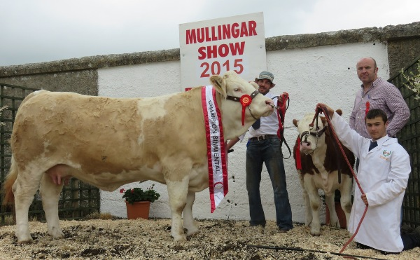 Mullingar Champion 'Clonagh Darling Eyes'