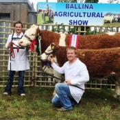 Ballina Champion Simmental for Neenan Bros