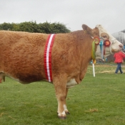 Bandon Show Female & Overall Champion Clonagh Willow